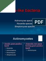 CMB301 Fungi Like Bacteria 2548