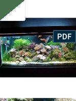 A Guide to Saltwater Aquarium