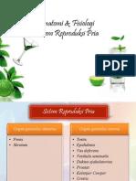 Anfis Sistem Reproduksi Pria