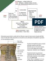 RIÑON- PLEXO.pdf