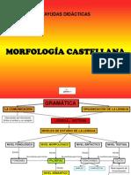 morfologia-