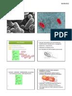 Bacterias Intro