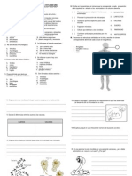 Sistema Linfaticoinmunologico