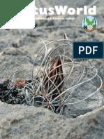 Turbinicarpus graminispinus  DCJMB8877