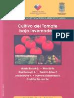 Cultivo Del Tomate en Invernadero