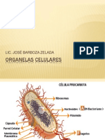 Organelas Celulares d