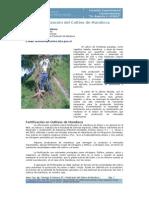 INTA_Fertilización del Cultivo de Mandioca