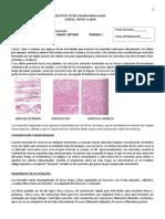 Sistema Muscular Guc3ada 33