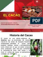 Exposicion Cacao