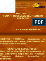 anatomia miologia miembro torácico