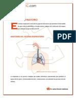 Sistema Respiratorio Global