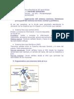 Bases biológicas y Neurofisiológicas del aprendizaje TP4 sist nervioso