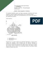 Bases biológicas y Neurofisiológicas del aprendizaje TP6 cerebelo