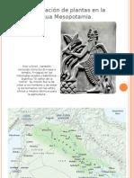 Domesticación de plantas en la antigua Mesopotamia
