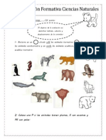 Formativa Animales