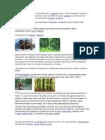 Biomas Del Planeta Para Ccnn