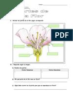 Partes de Las Flores y Polinizacion