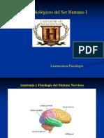 Anatomía y Fisiología del SN