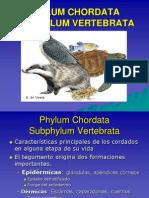 vertebrata. ppt(1)