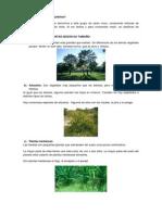 Cómo se clasifican las plantas