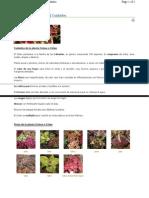 Plantas - Coleus- Cretona