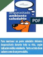 Perro Desparasitado Ambiente Saludable
