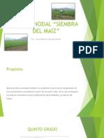 PUNTO NODAL Siembra del Maíz.pptx