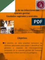 Diagnostico de Las Infecciones Del Aparato Genital PRESENTACION