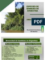 Especies de Bambú en Argentina