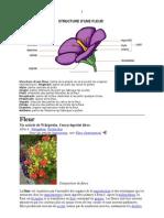 Structure d'Une Fleur