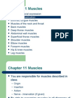 11 Muscles