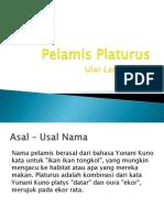 Pelamis Platurus