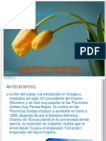 Crisis de Tulipanes en Holanda
