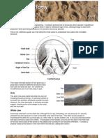 hoof_anatomy.pdf