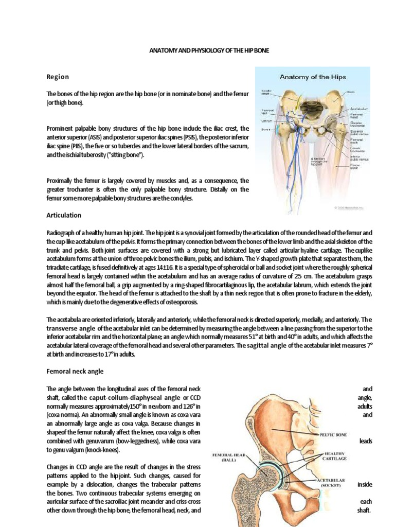 Beste Anatomy And Physiology Of Articulatory System Fotos ...