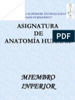ANATOMIA 2008  MIEMBRO INFERIOR1.ppt