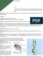 Exploración de ojo.docx