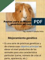 Mejoramiento Genetico en Cuyes