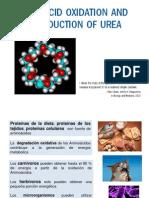 Oxidacion Aa y Urea