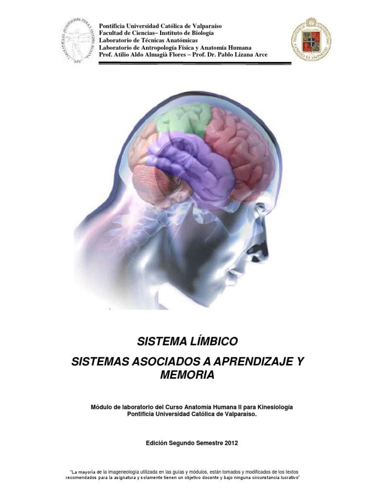 Increíble Anatomía Cerebral Del Hipocampo Colección de Imágenes ...