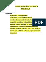ortopedie  Radiusul