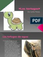 Las tortugas♥