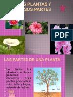 Constanza, Las Plantas y Sus Partes