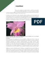 Los virus de orquídeas
