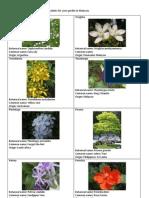 Tropical Plants List