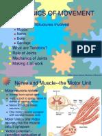 Mechanics of Movement I Joints