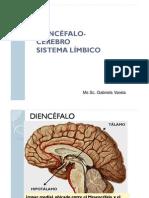 Diencefalo Cerebro Anatomia