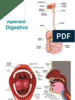 digestivo[1]