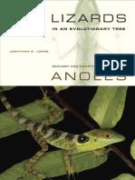 Lizards Anoles