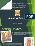 Diapos Hueso Alveolar